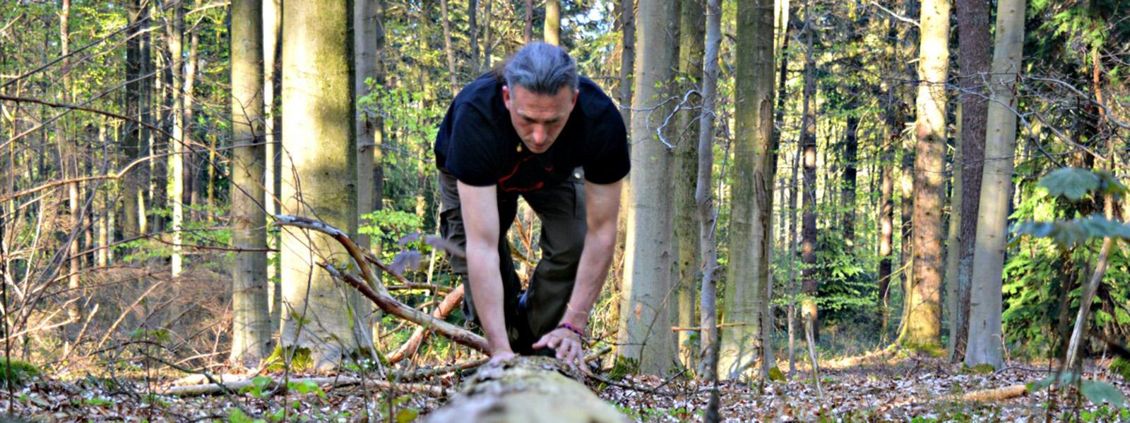 Rewilding in the woods